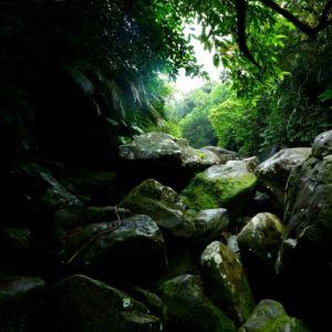 アマゾンのジャングル